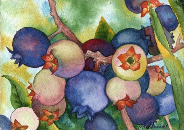 Wild Blueberries an original watercolor by Helen R Klebesadel