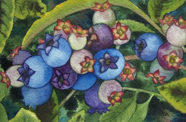 Wild Blueberries II by Helen R Klebesadel