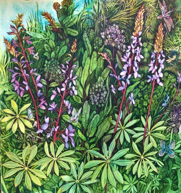Wild Lupine and Common Milkweed by Helen R Klebesadel