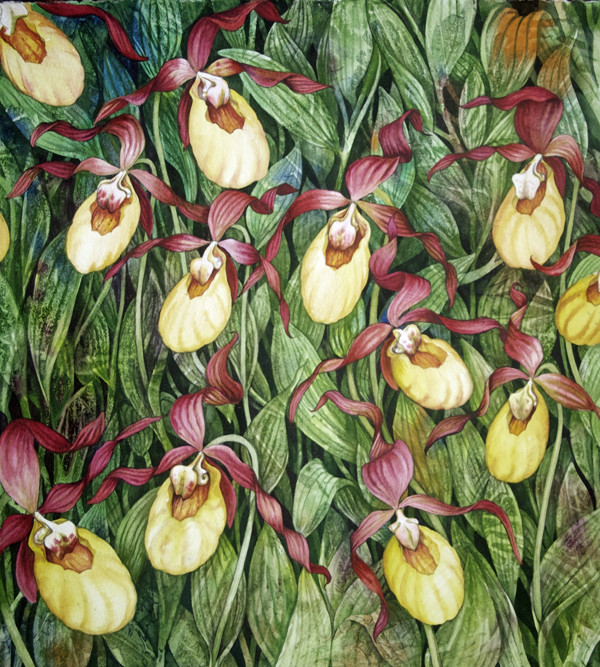 Yellow Lady Slipper Field by Helen R Klebesadel
