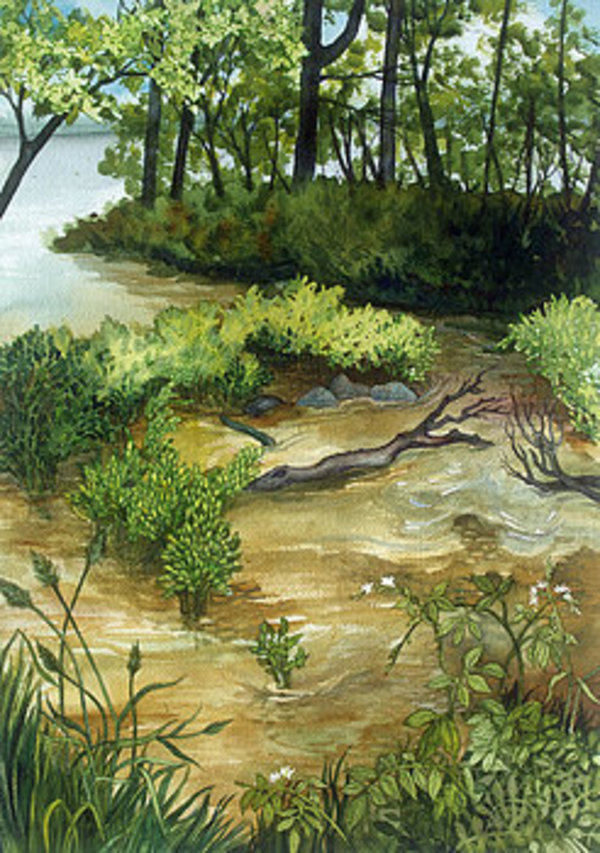 Allequash Creek On Trout Lake by Helen R Klebesadel