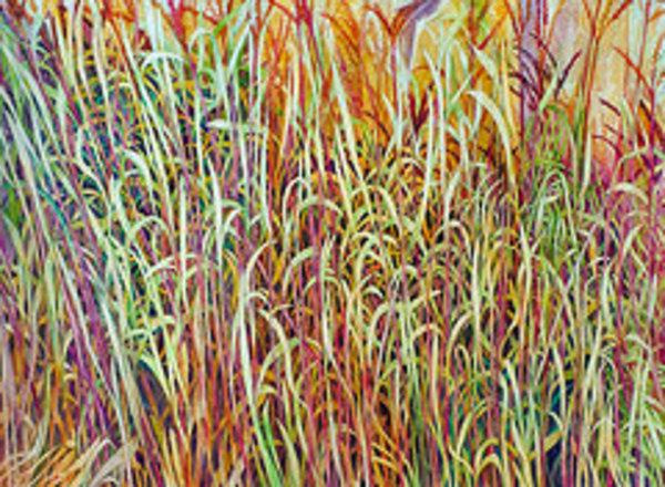 Prairie Grasses by Helen R Klebesadel
