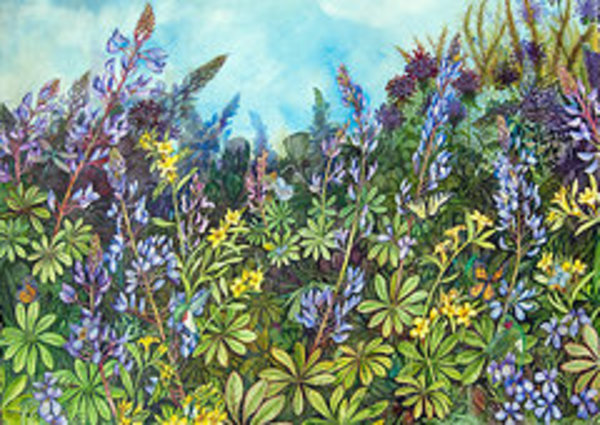 Wild Lupine and  Hoary Poocan by Helen R Klebesadel