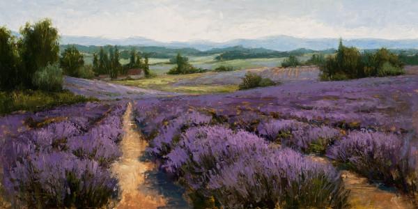 Lavender Fields by Jane Hunt