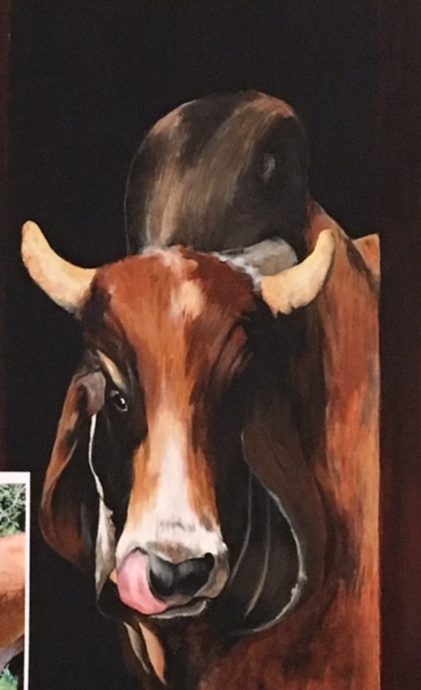 Cattle - Sonny Boy by Ann A Blake