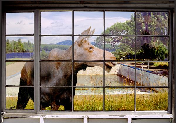 Moosehead Lake by Peter J Sucy Digital Arts