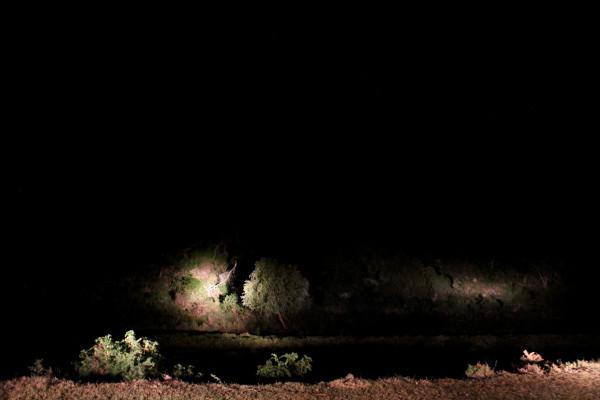 Car Headlights by Marcus Neustetter