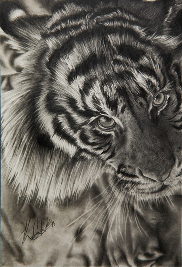 Eye of the Tiger by Karon Clerk