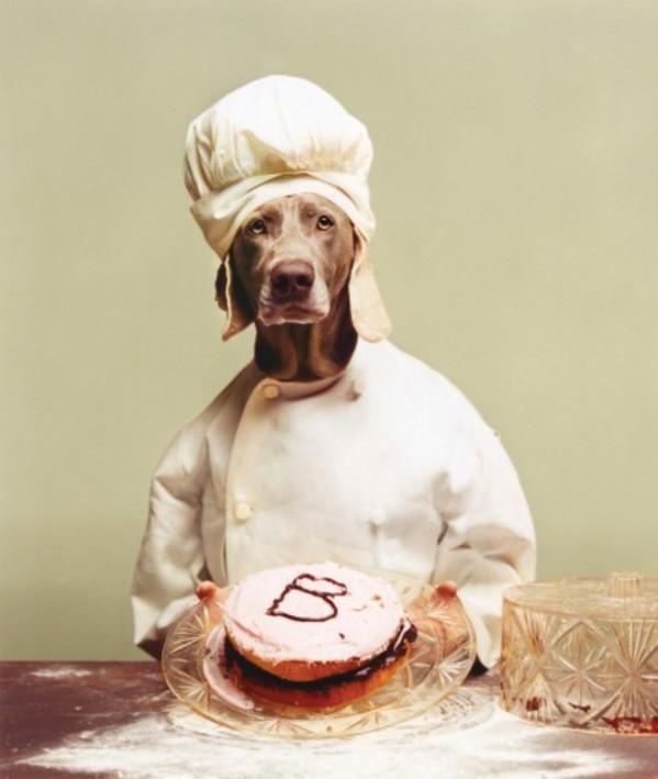 B is for Baker by William Wegman