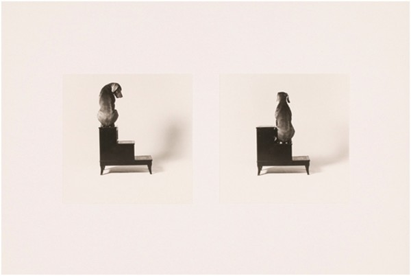 2nd and 3rd Steps by William Wegman