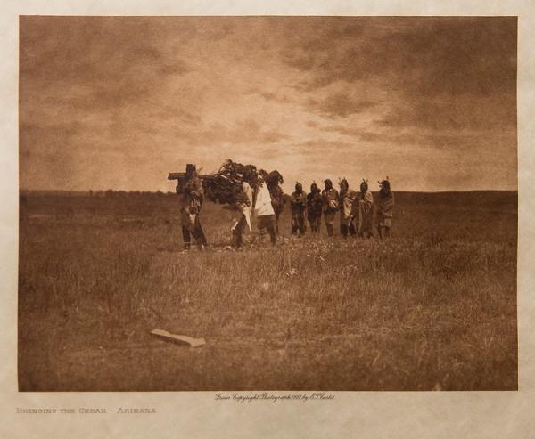 Bringing The Cedar-Arikara, 1908 by Edward S. Curtis