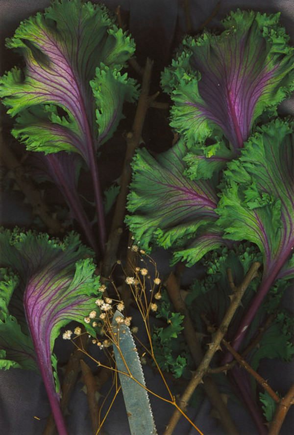 Savoy Cabbage, Baby's Breath, Blade by Darryl Curran