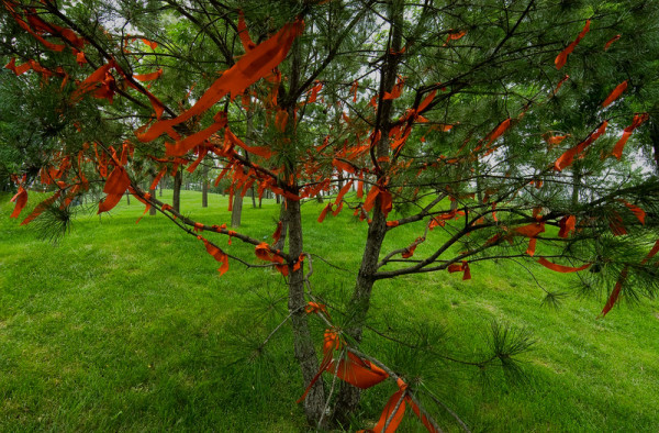 Tree with Prayer Flags, China by Barry Andersen