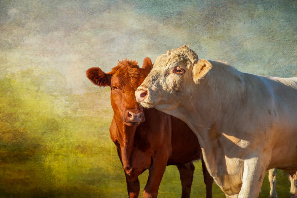 Something In the Way You Moove by Laura Berman