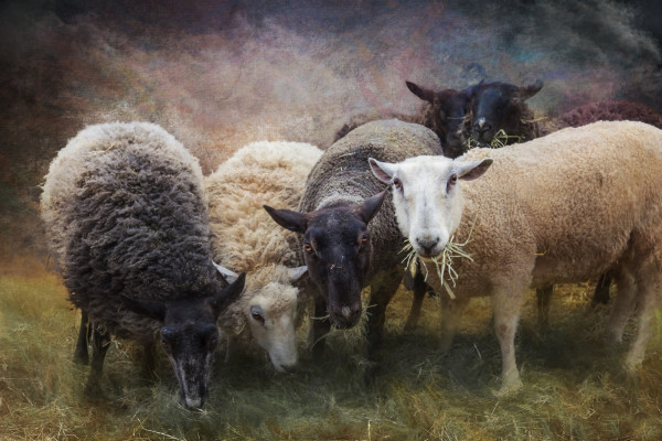 The Gathering by Laura Berman