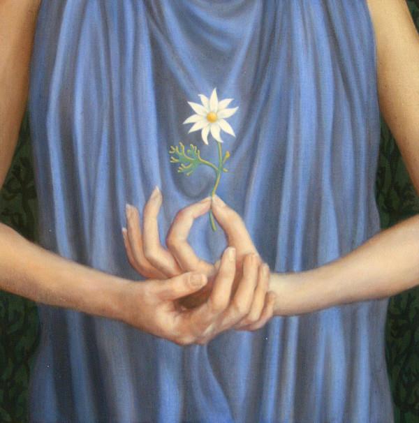Flannel flower by Yvonne East