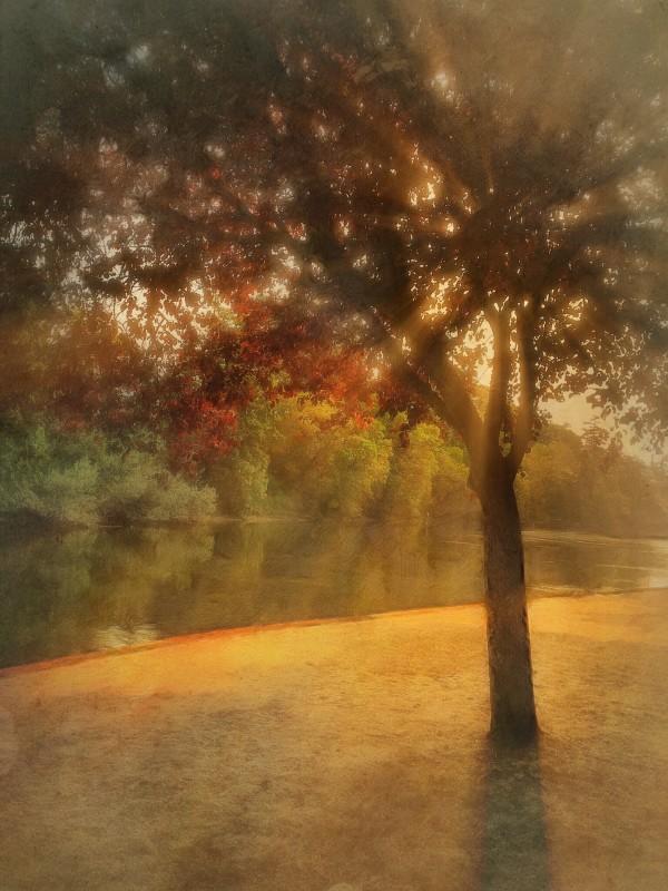Morning Light by Tony Bounsall