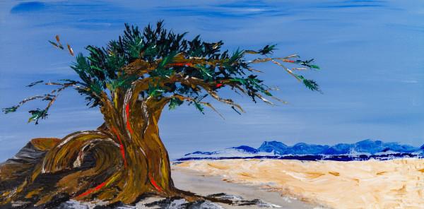 Windswept Tree by M Shane