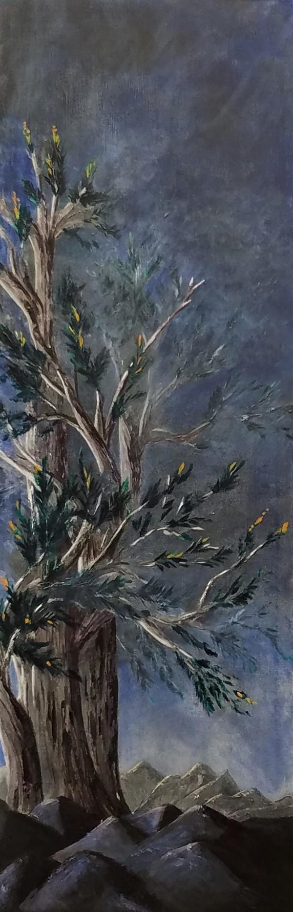 Bristlecone by M Shane