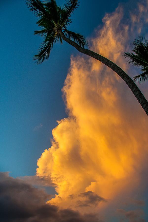 Curvy Palm Sunset by E Wand