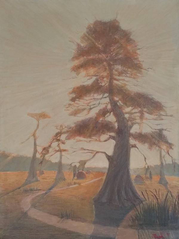 Backlit Tree by Leslie  Martin