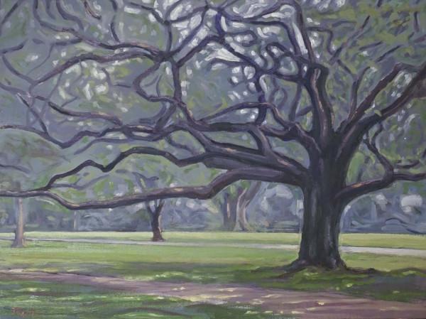 Oak Tree in Audubon Park  by Leslie  Martin
