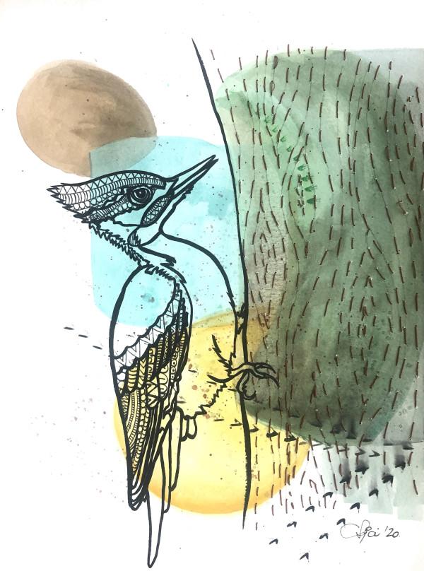由Anja Studer的Pileated Woodpecker