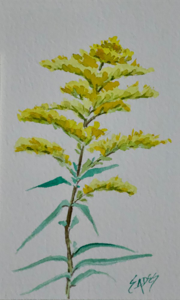 Goldenrod by Linda Eades Blackburn