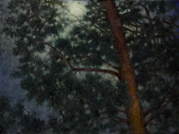 Moonlight Thru the Pines by Linda Eades Blackburn
