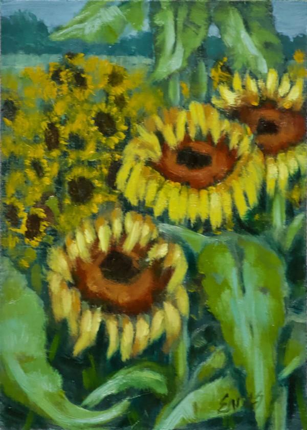 Sunflower Farm by Linda Eades Blackburn