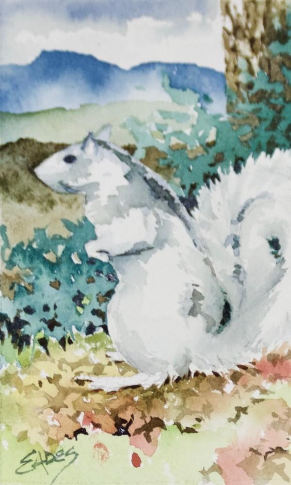 White Squirrel WC by Linda Eades Blackburn