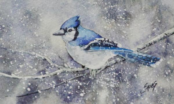 Winter  Jay by Linda Eades Blackburn