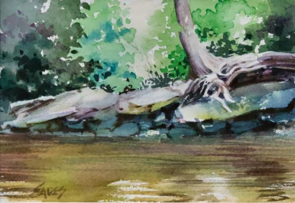Withlacoochee by Linda Eades Blackburn