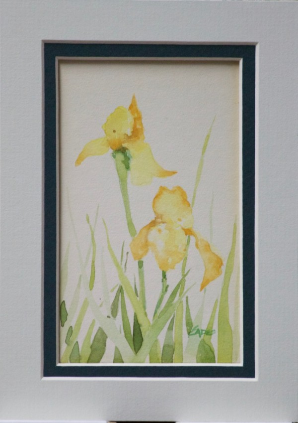 Yellow Iris by Linda Eades Blackburn