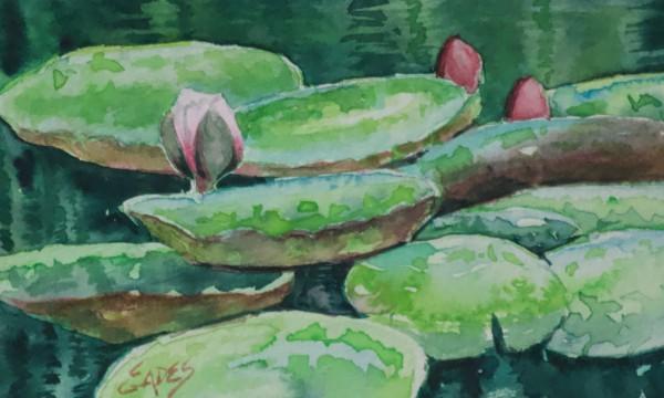 Watercolor Lotus WC by Linda Eades Blackburn