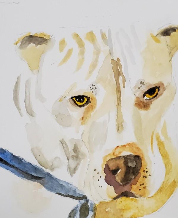 Stella by Sharon Allen