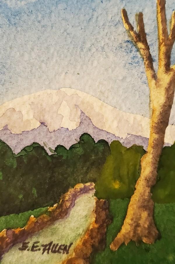Snowcap by Sharon Allen