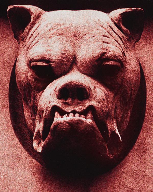 Bulldog by Stefan Tur