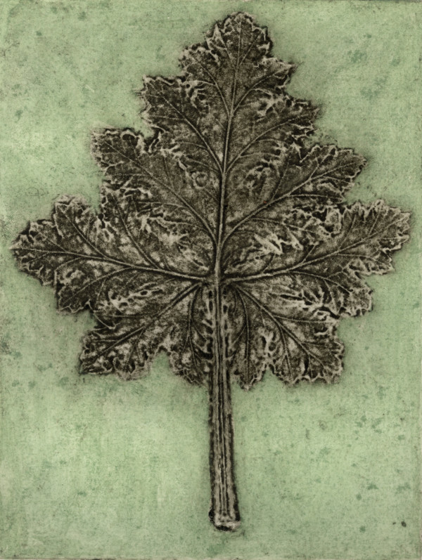 Pelargonium 2, 5/11 by Jacky Lowry
