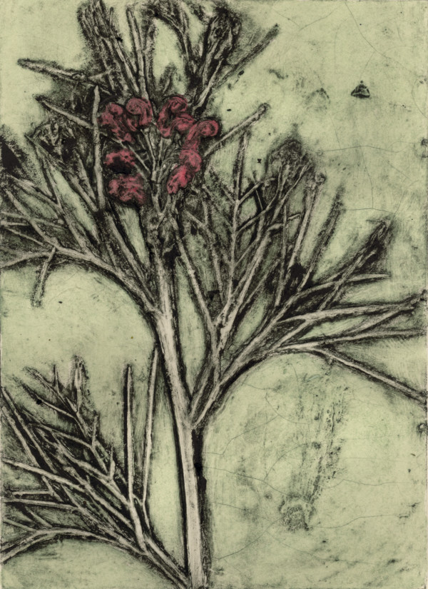 Albany Grevilea 2, EV 1/10 © Jacky Lowry 2017,  Collagraph Print on Paper by Jacky Lowry