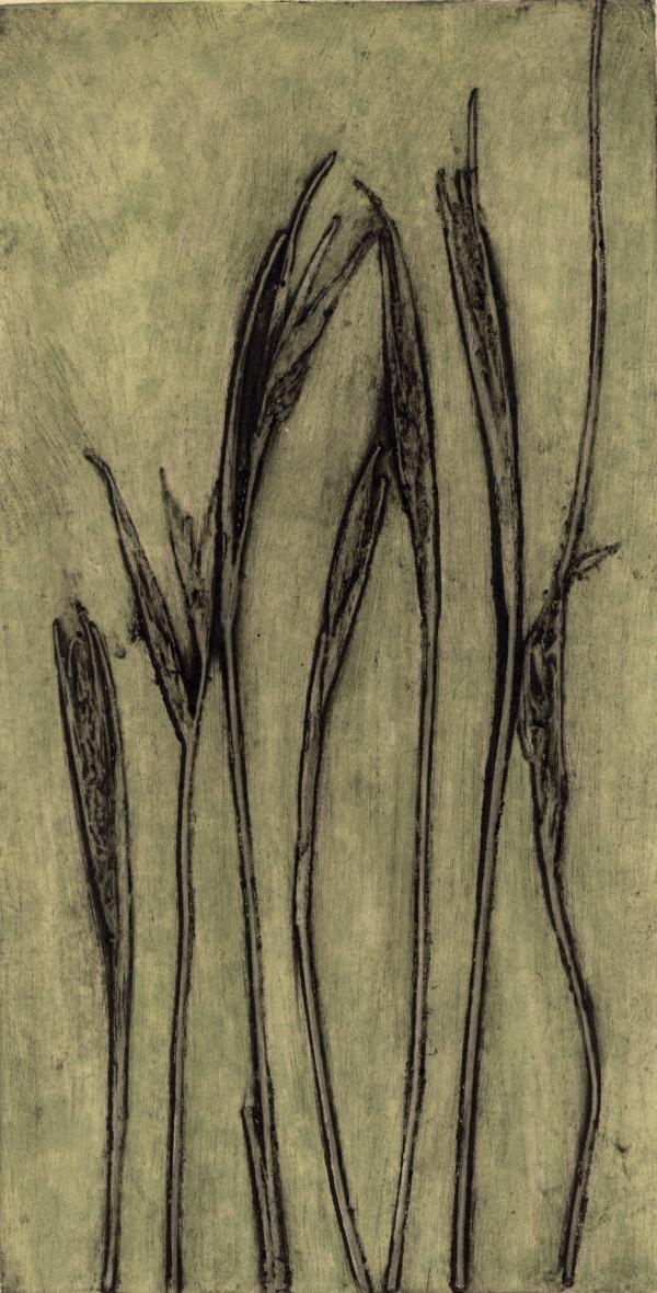 Anarthria gracilis EV1/11  by Jacky Lowry