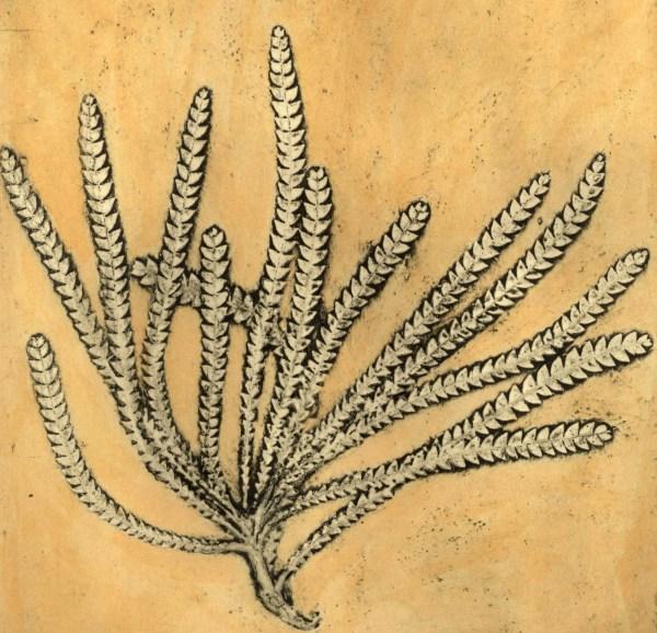 Banksia (Dryandra)1, 4/8 by Jacky Lowry