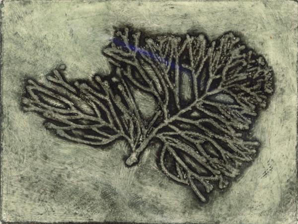 Callitris, 9/9 by Jacky Lowry