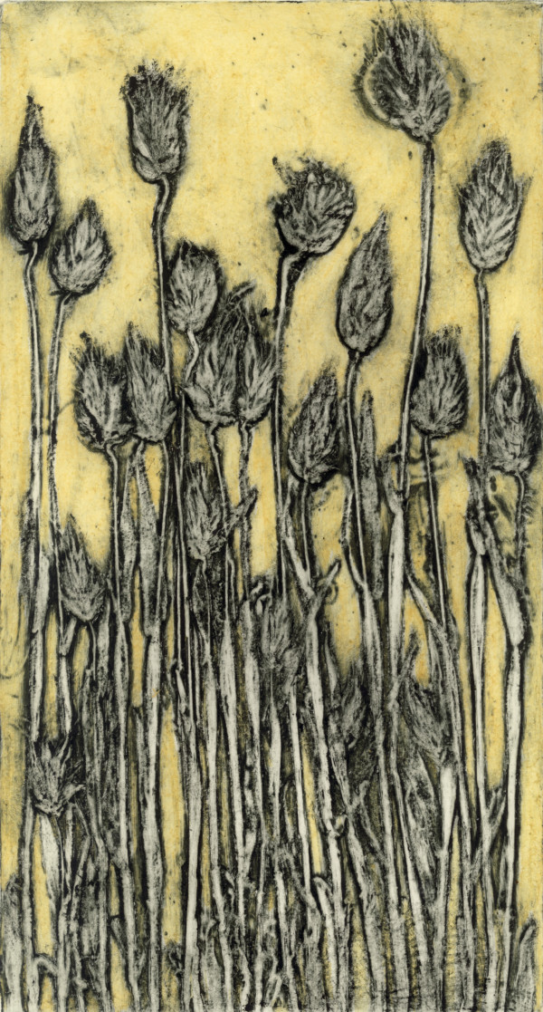 Cotton Tail Grass 6-8 by Jacky Lowry