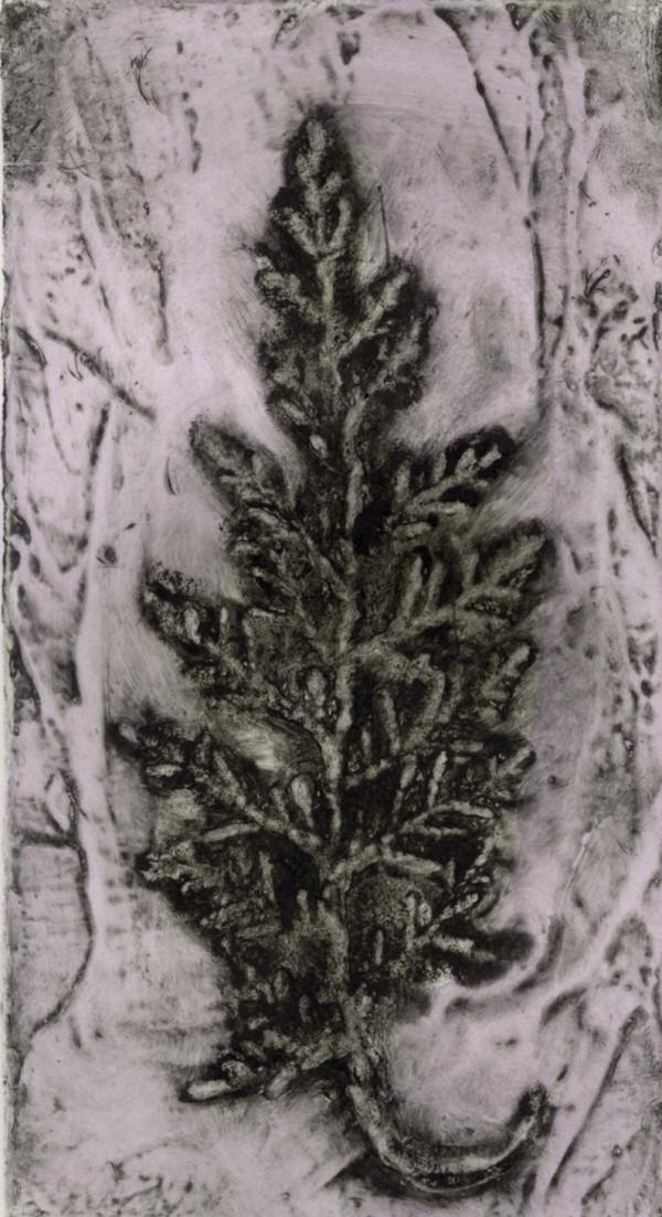 Cypress 3 by Jacky Lowry