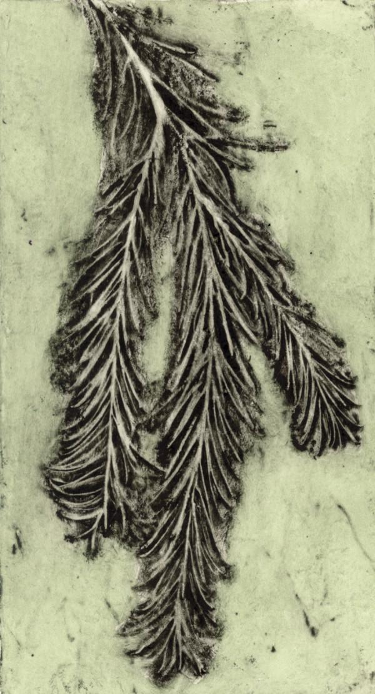 Melaleuca 3, 6/10 by Jacky Lowry