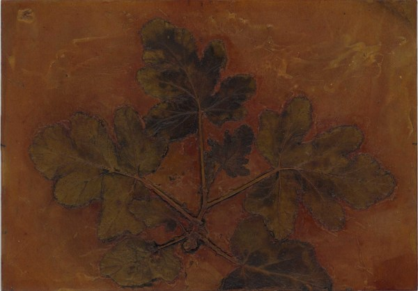 Scented Pelargonium 3, Plate by Jacky Lowry