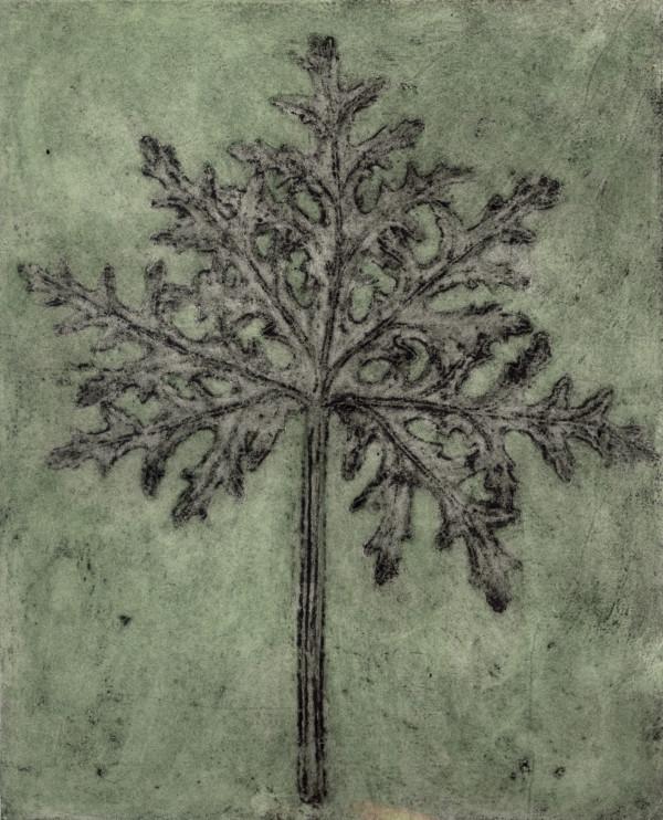 Scented Pelargonium 1, 2/6 by Jacky Lowry