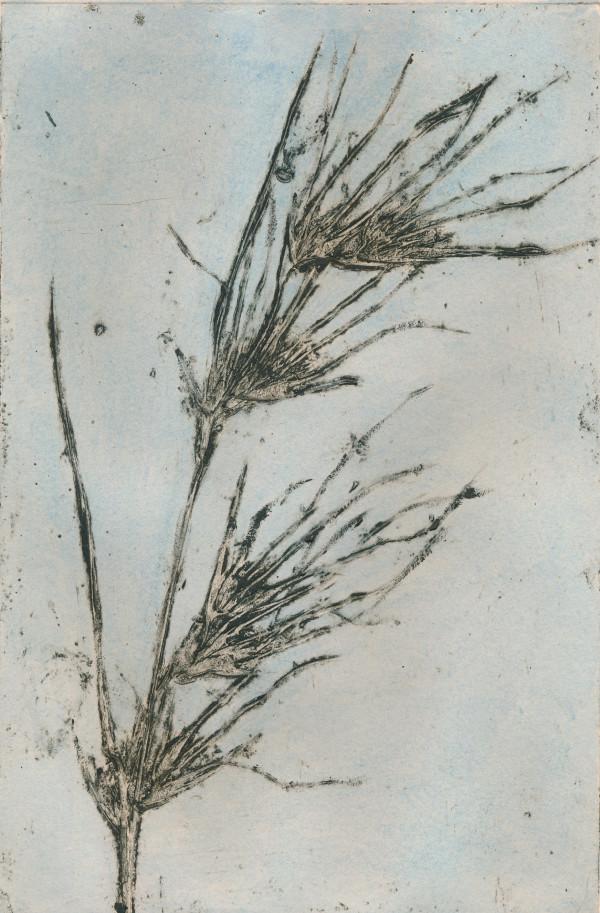 Kangaroo Grass 3 2/8 #2 of 8 by Jacky Lowry
