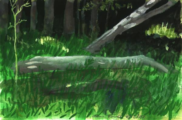 August 15, 2007 Fallen Tree by Alan Powell
